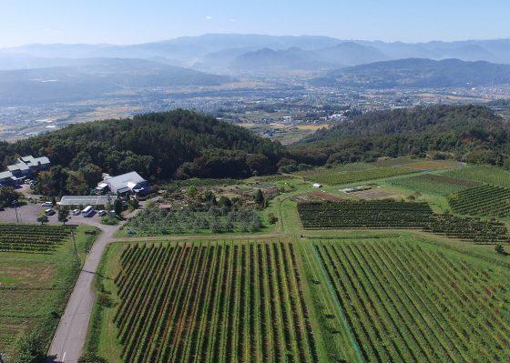 千曲川ワインバレーを訪ねて<br>地元ワインとランチを楽しむ休日