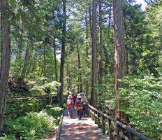 GoToトラベル事業支援対象<br>赤沢自然休養林ハイキングと福島宿探訪