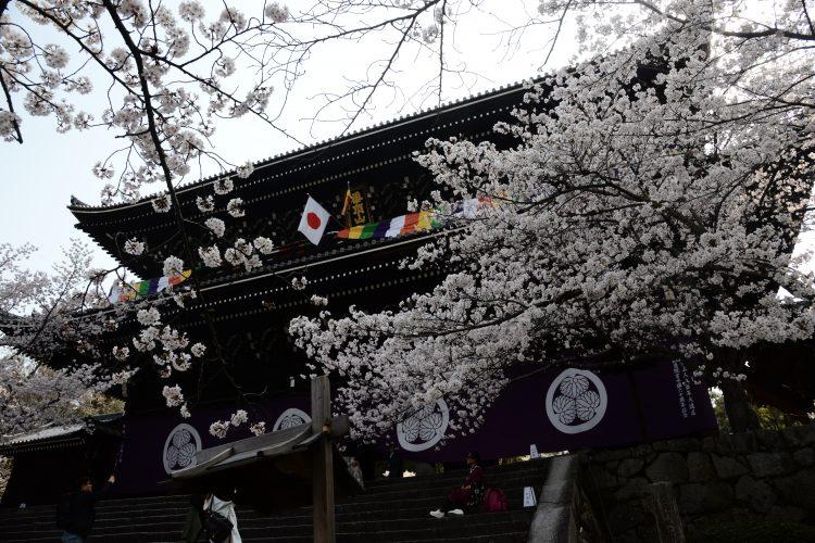 桜色に包まれる春の京都<br>「三十三間堂」夜間貸切ライトアップ拝観と<br>世界遺産「下鴨神社」王朝舞貸切鑑賞
